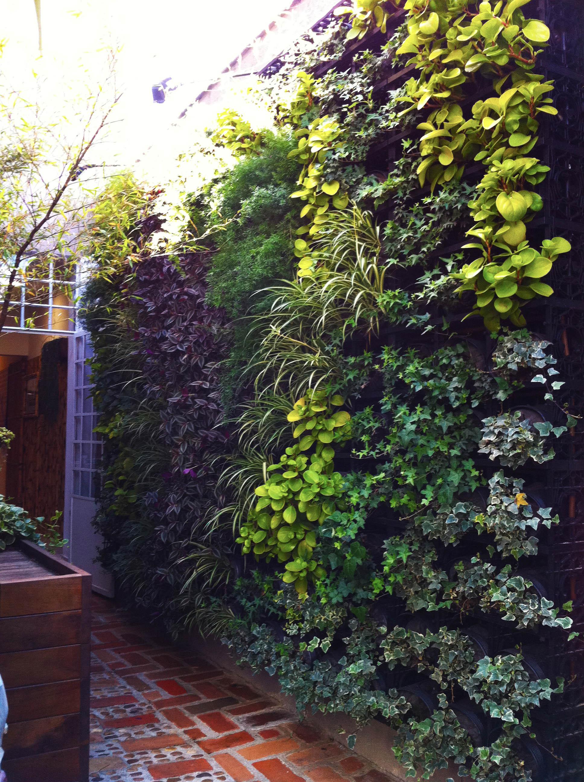 jardim na vertical _ foto reportagem
