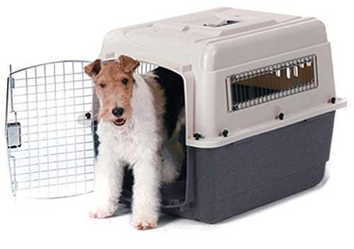 Caixa-para-Transporte-de-Cachorro-5